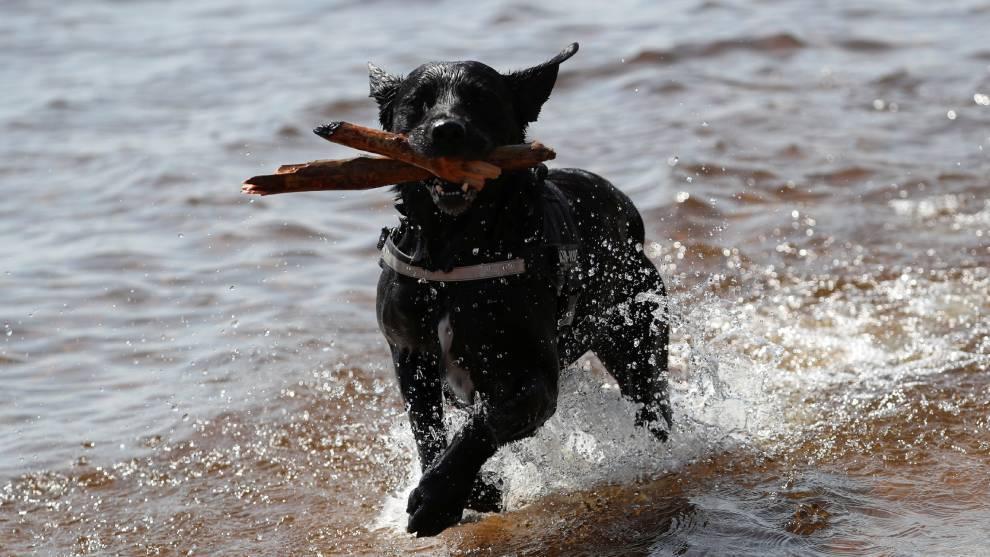 Día Mundial del Perro, origen de la celebración en México y el...