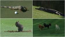 Los otros animales que se 'pasaron' al golf