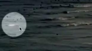 Graban el ataque mortal de un tiburón blanco, que burló las trampas, a un surfista