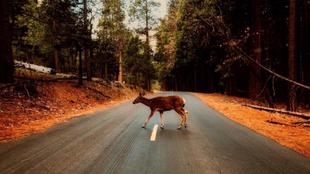 La colisión con un animal en carretera puede causar grandes daños