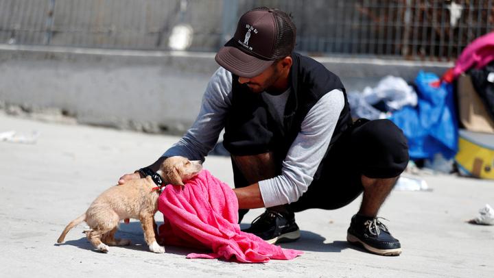 Cientos de perros fueron rescatados de las calles de Cancún  