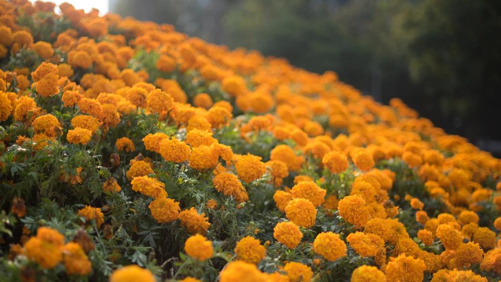 La leyenda de a Flor de Cempas�chil