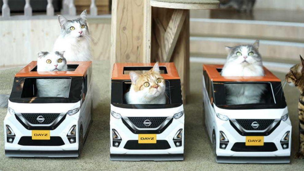 El Nissan Dayz es el mejor amigo del gato en los cat cafés de Tokio