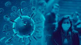 La llama Cormac podría ser una solución contra el coronavirus