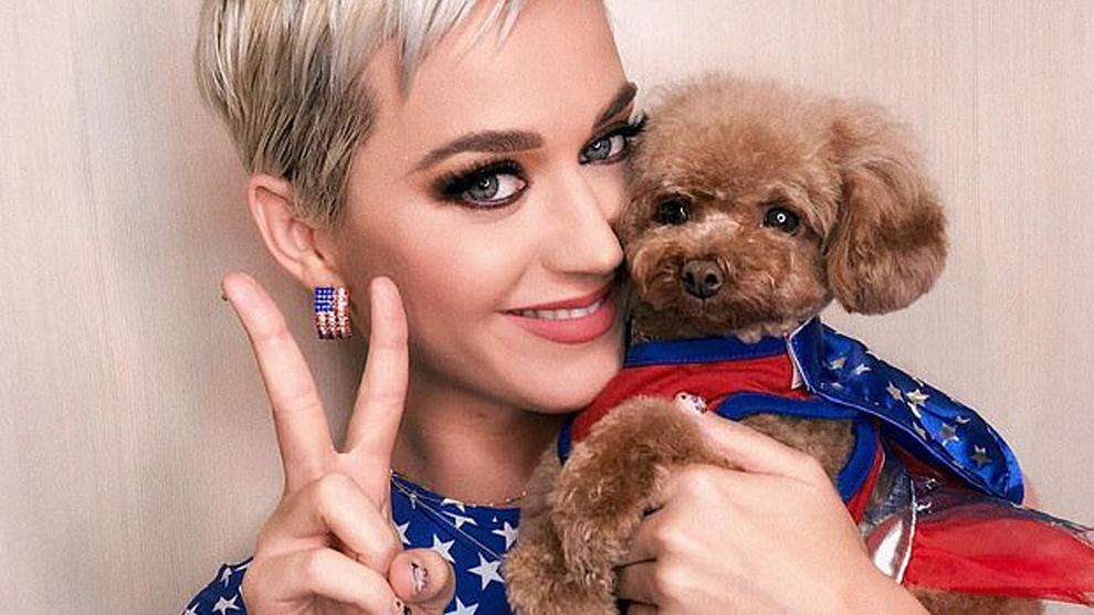 """Katy Perry: """"Estoy lista en un 95% para ser 100% vegana... Mi perro..."""