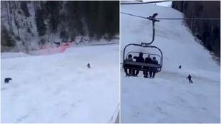 Un esquiador es perseguido por un oso mientras baja por una pista.
