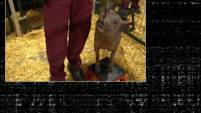 Gertrude Pig Neuralink