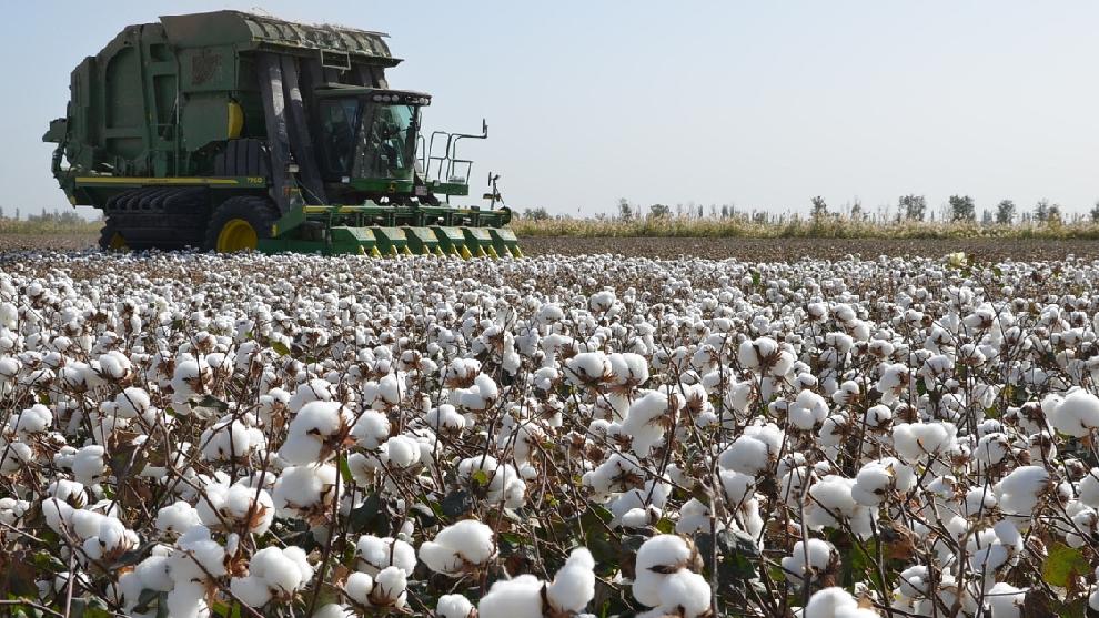 Cosecha de algodón en Xinjiang