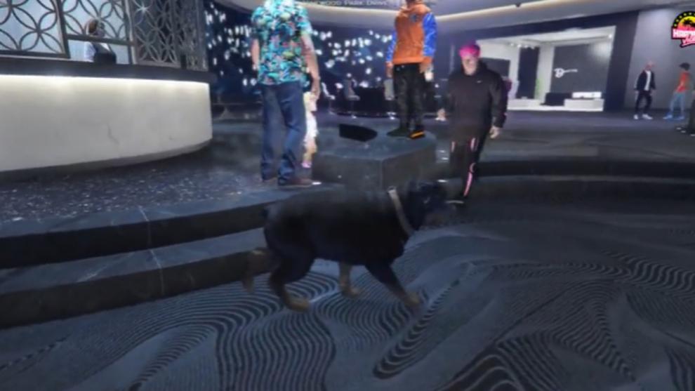 Alexby es un perro en Marbella Vice