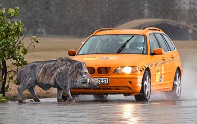 Atropello a animales