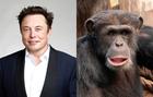 """Elon Musk dice que ha implantado un chip en el cerebro de un mono para que """"juegue a videojuegos con la mente"""""""