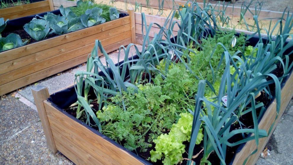 Una selección de maceteros, estructuras y semillas para crear un...