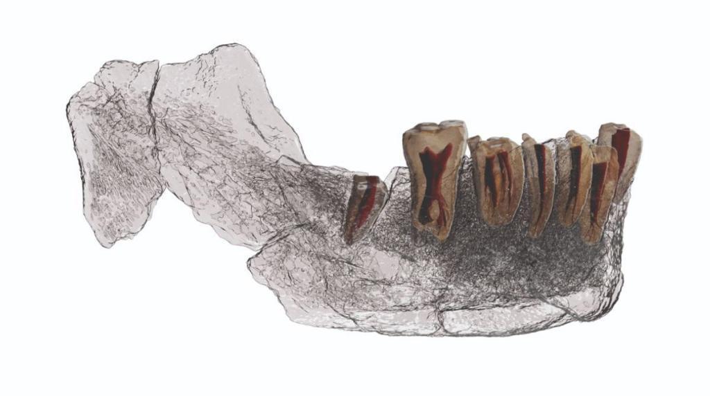 Dibujo la mandíbula y los dientes de Nesher Ramla /