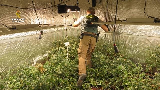 Plantacion de marihuana en camiones - Plantacion indoor - Operacion Guardia Civil