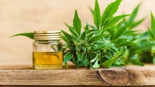 El CBD destaca por sus propiedades analgésicas y calmantes.