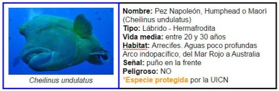Ficha Pez Napole�n