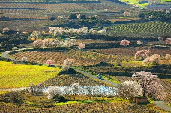 Paisaje de La Rioja