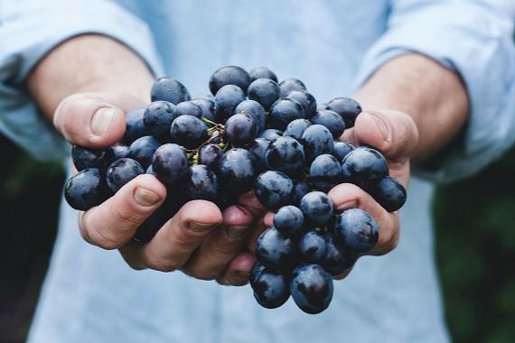 uvas y vinoterapia en La Rioja