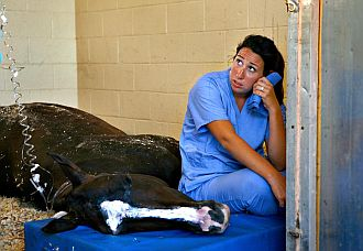 Una veterinaria junto a uno de los caballos muertos
