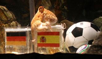 Paul eligió a España en la semifinal