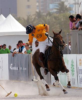 Un equipo de veterinarios especializados se encargar� de cuidar a los 60 caballos inscritos en el campeonato.