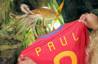 El Pulpo Paul tiene hasta 'manager'