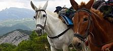 Trekking Mule: Pirineo en código outdoor