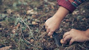 Dónde encontrar setas este invierno