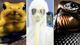 DANGER! Los 20 venenos más letales del mundo