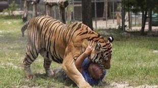 Los 25 animales que más humanos matan al año
