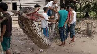 Los 20 ataques de serpientes más salvajes jamás vistos
