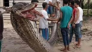 Los 20 ataques de serpientes más espectaculares jamás vistos