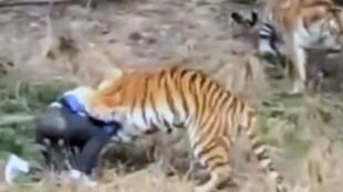 Los ataques de animales a personas más salvajes jamás vistos