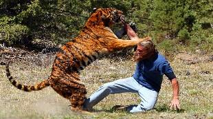 Los 15 ataques de animales a personas más salvajes jamás vistos