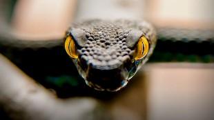 Los 20 ataques de serpientes más espectaculares