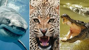 Los 25 animales que más personas matan cada año, ¡muchos te sorprenderán!