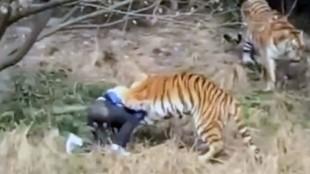 Los 15 ataques de animales a personas más salvajes