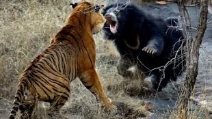 Las 20 peleas de animales salvajes más brutales que verás jamás