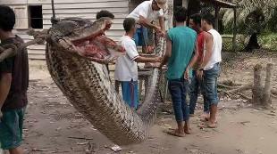 20 espectaculares ataques de serpientes