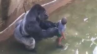 Los ataques de animales a personas más salvajes que verás jamás