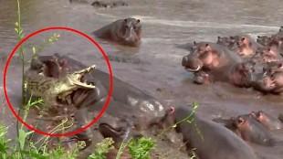 Las peleas de animales salvajes más brutales que verás jamás