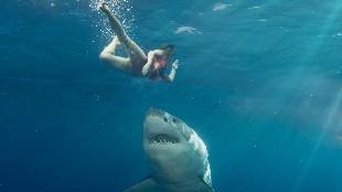 Los 20 ataques más brutales de tiburones