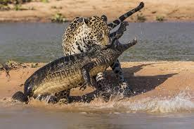 Las peleas entre animales salvajes más brutales que verás jamás