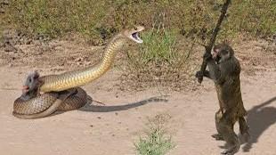 Las peleas entre animales salvajes que desearás no haber visto
